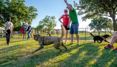 parc pentru câini